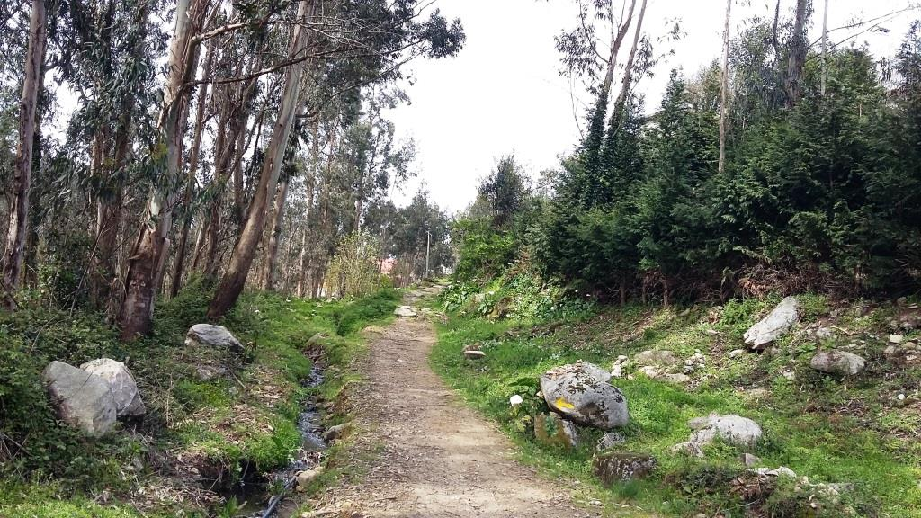camino-santiago-de-compostela-9