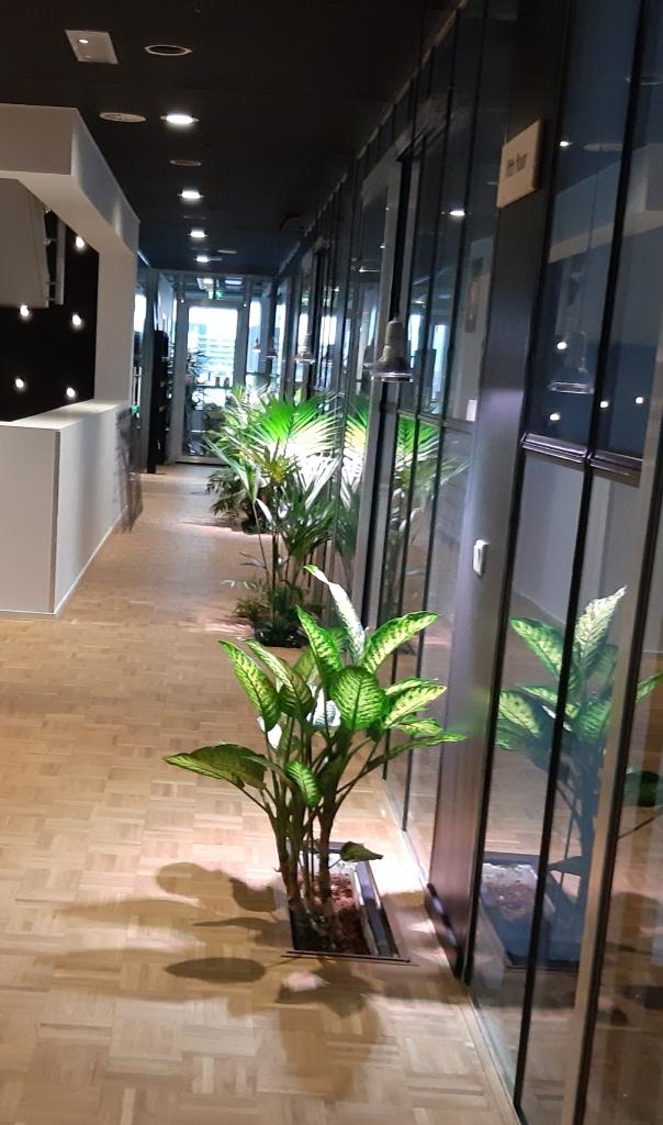 rože v coworking prostorih