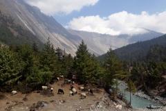 nepal petra skarja