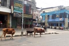 nepal treking pokhara