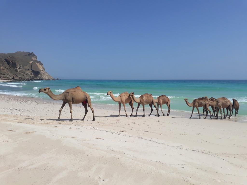 Potovanje Oman - foto Petra Škarja 18