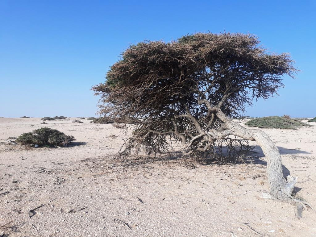Potovanje Oman - foto Petra 4