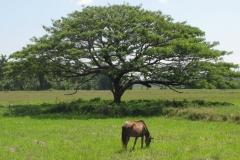 srilanka potovanje 65