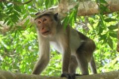 srilanka potovanje 9 (3)