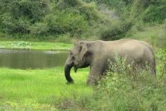 srilanka potovanje 9