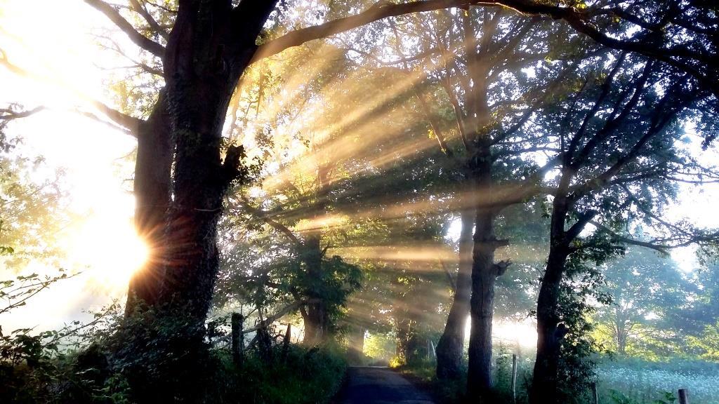 camino od suzenjstva do svobode petra skarja; jakobova pot